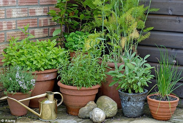 9 ways to mosquito proof your yard for summer drdrainage for Best plants for outdoor garden