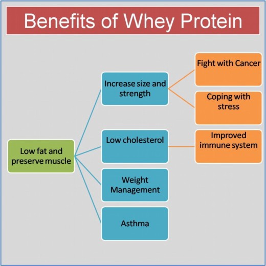 Whey Protein : Benefits, Types and Side Effects – Health ...