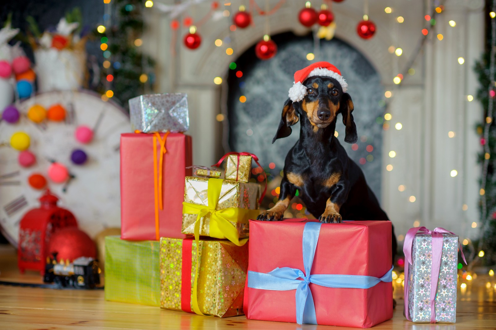 The ULTIMATE Christmas gift list for your pooch – Happy Hound – Medium