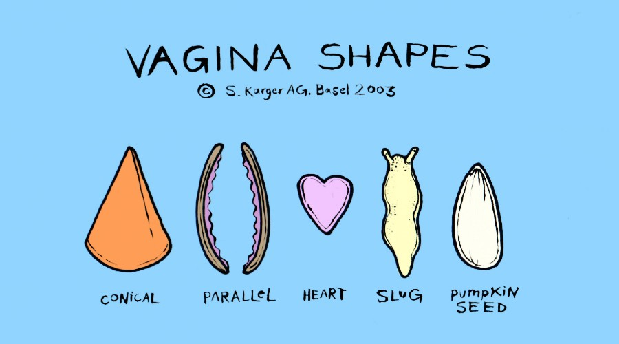That Study Did Its Best To Kick Off Such Research By Examining The Vaginal Sizes Of 50 Participants Its Main Finding A Wide Range Of Values Were Noted