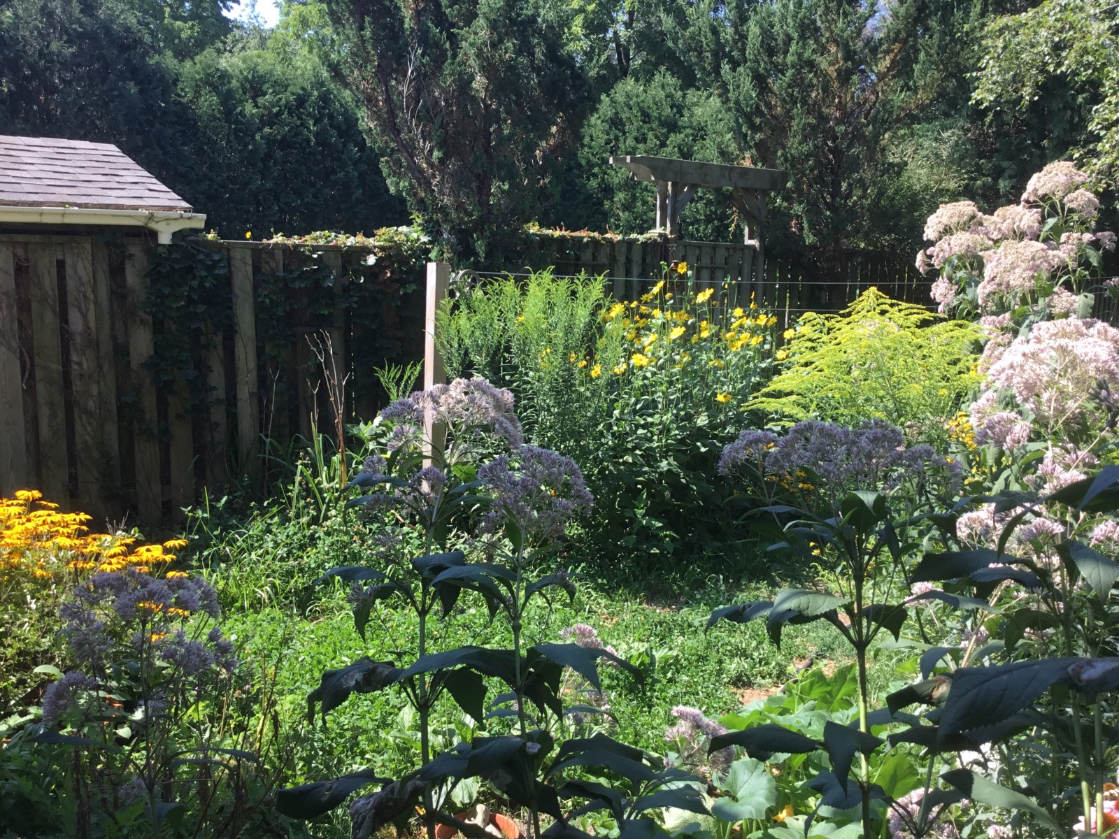 Backyard Permaculture permaculture in the 'burbs – permaculturewomen – medium