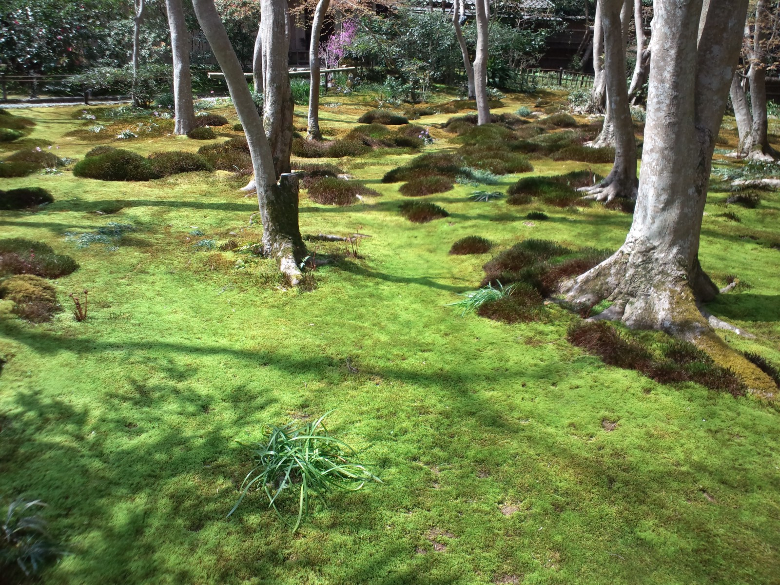 Always Be Mindful That A Zen Garden Represents A Much Bigger Natural  Landscape In Miniature. Itu0027s Like Brining Natureu0027s Serenity To Our Homes. Part 43