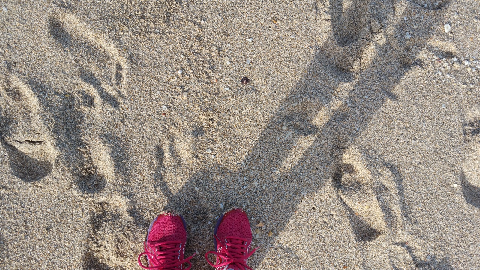 Why is it so difficult to get 10,000 steps? 100 word story