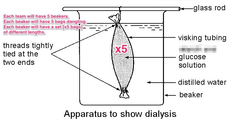 surface area to volume ratio and the relation to the rate of diffusion essay An increased surface area to volume ratio increases the rate at which water  the  cell becomes thinner allowing for a shorter diffusion pathway.