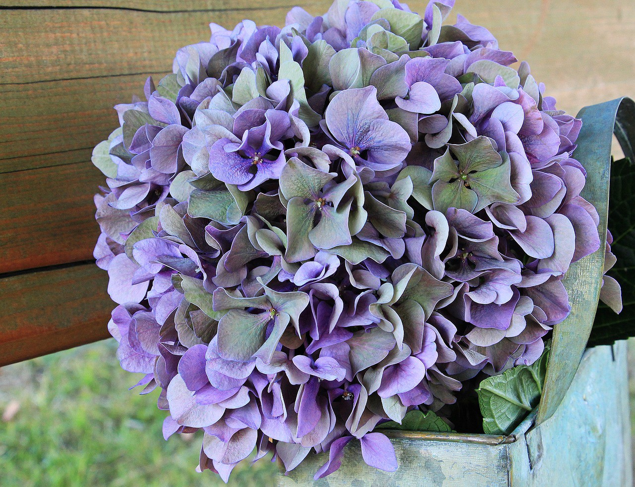 Rare Flowers To Gift Allergy Sufferers Flower Delivery Tarzana