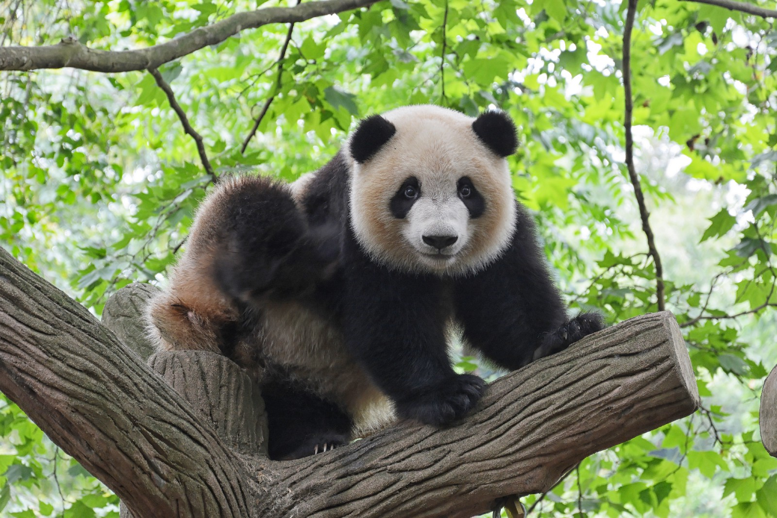 A quick tip for pulling data from a Pandas dataframe using SQL queries