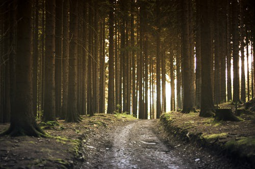 Can Spending Time In Nature Improve >> The Importance Of Spending Time In Nature Richard Mgrdechian Medium