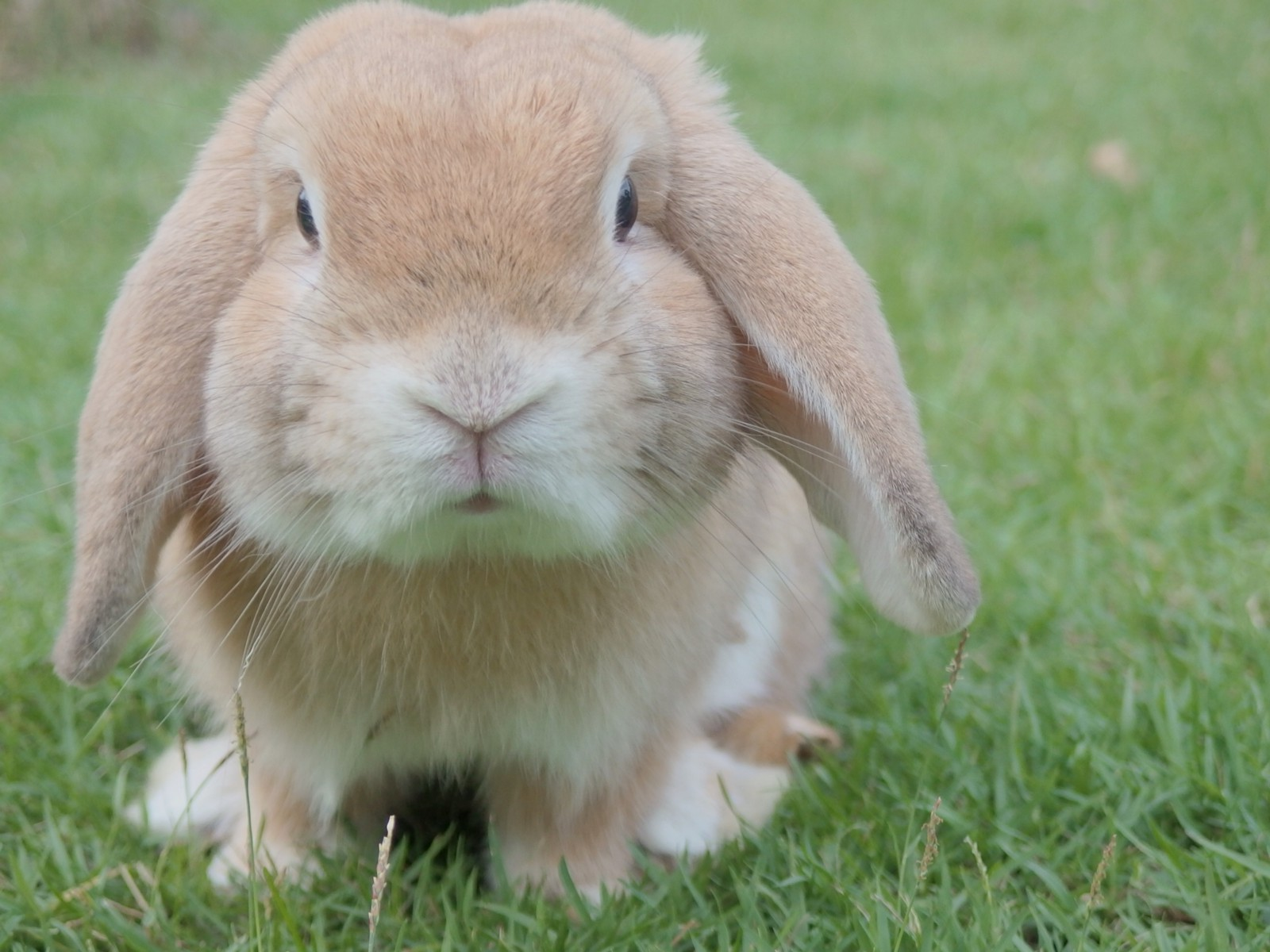 a little story about a rabbit that will teach you about life
