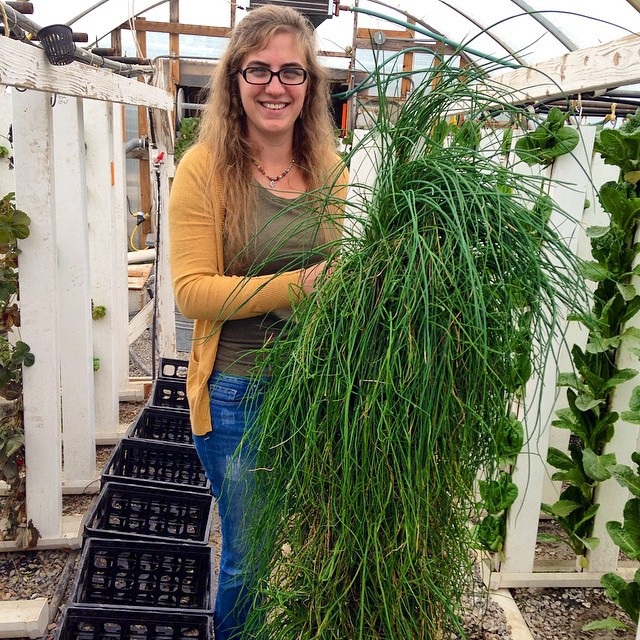 Growing Chives in Hydroponics (without soil) – Bright ...