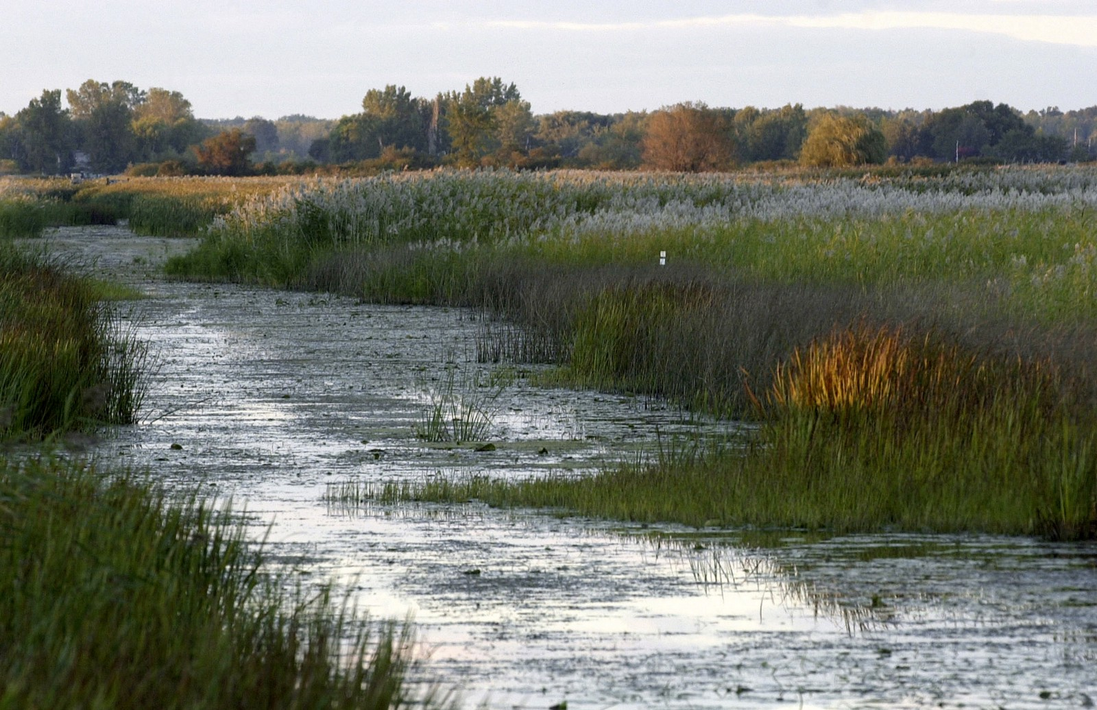 WOTUS repeal welcomed by some farmers, ag groups, lawmakers