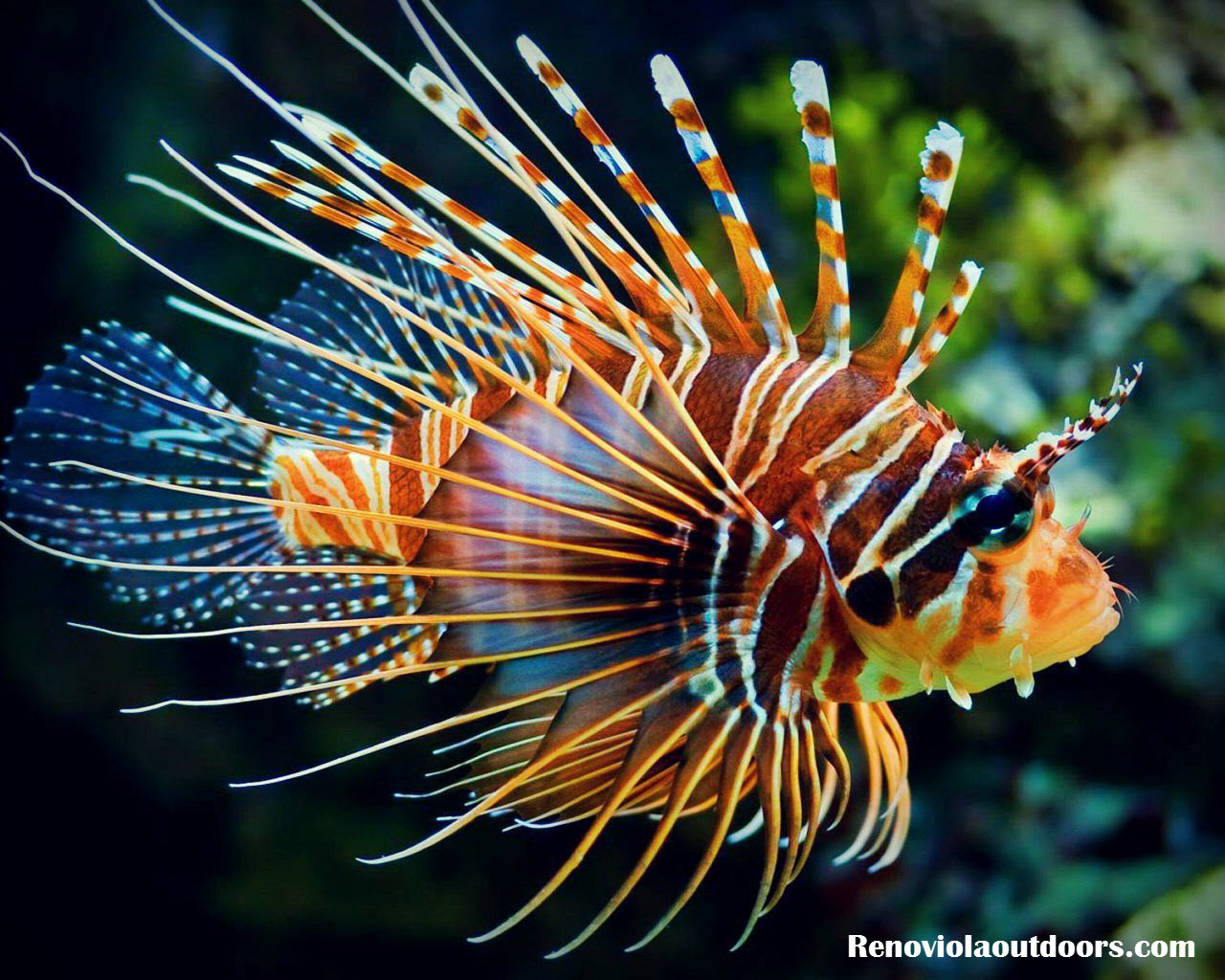The most beautiful fish in the world: list, description and reviews 97