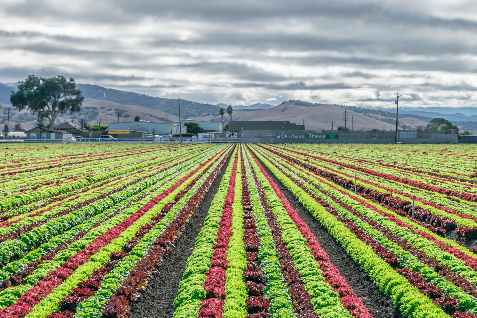 imagining a regenerative economy in the central valley
