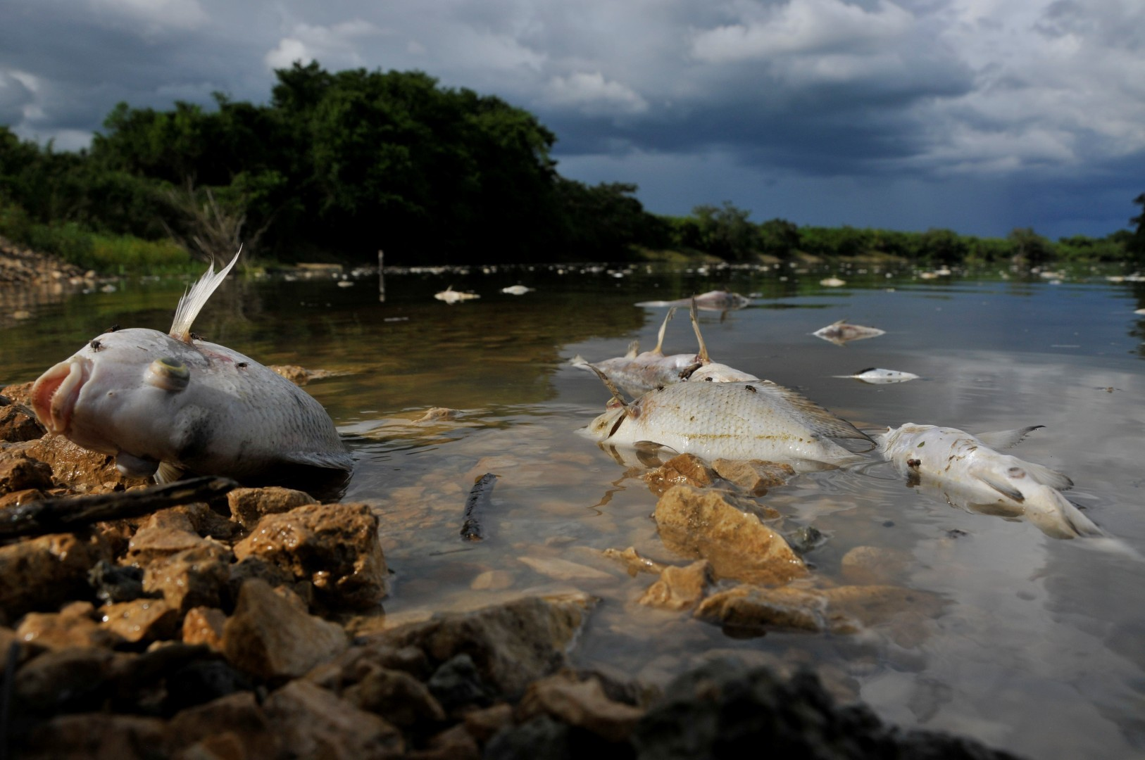 Justice delayed is justice denied in Guatemala's palm oil-driven ...