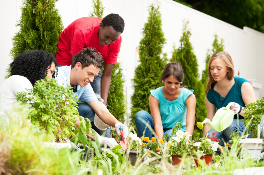Horticultural Therapy Aids In Pshchological Disorders