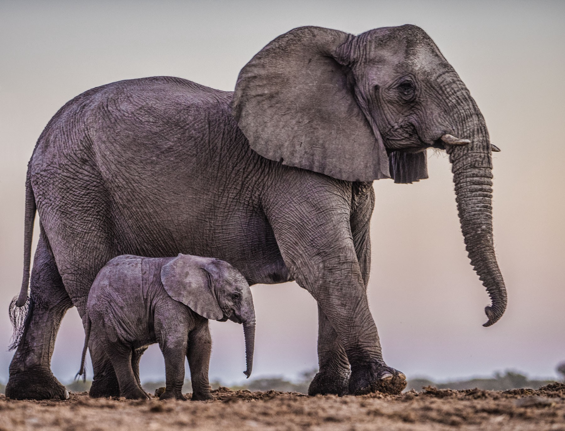 my summer vacation three weeks with elephants stanford magazine