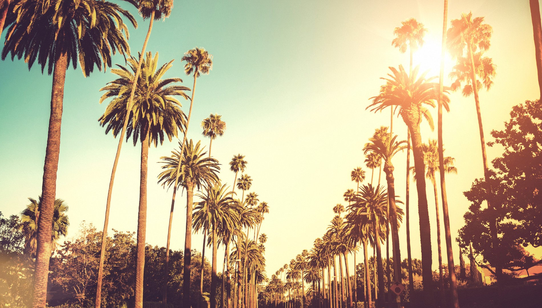 Image result for Los angeles palm trees
