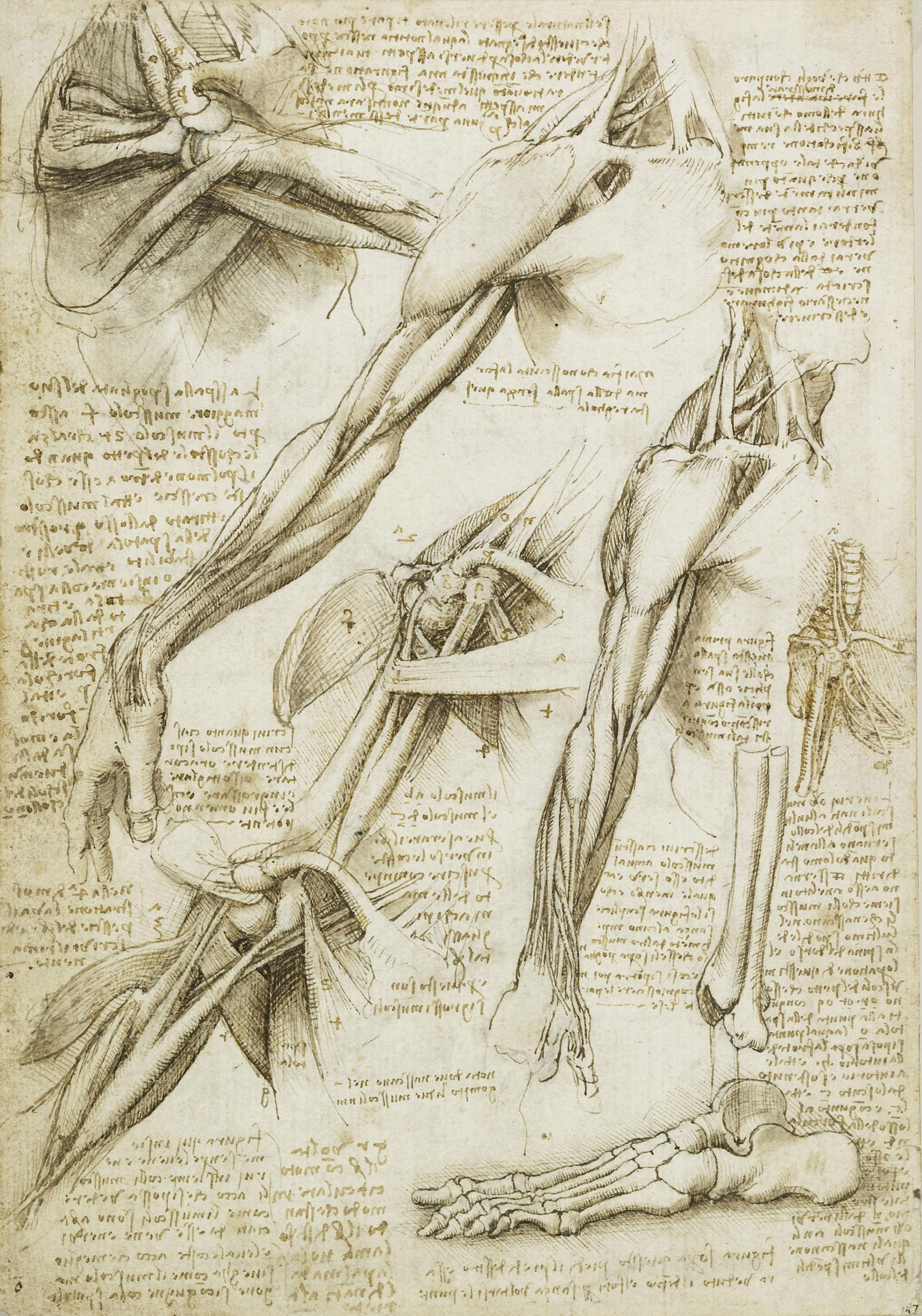 The Nature Of The Human Body Leonardo Da Vinci Medium