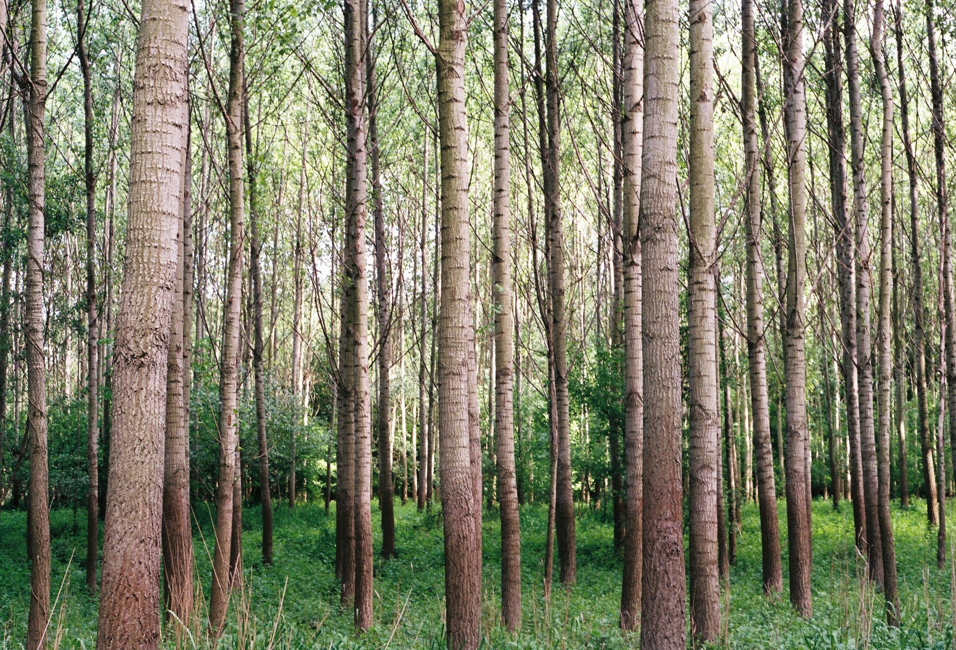 Learn How Decision Trees are Grown