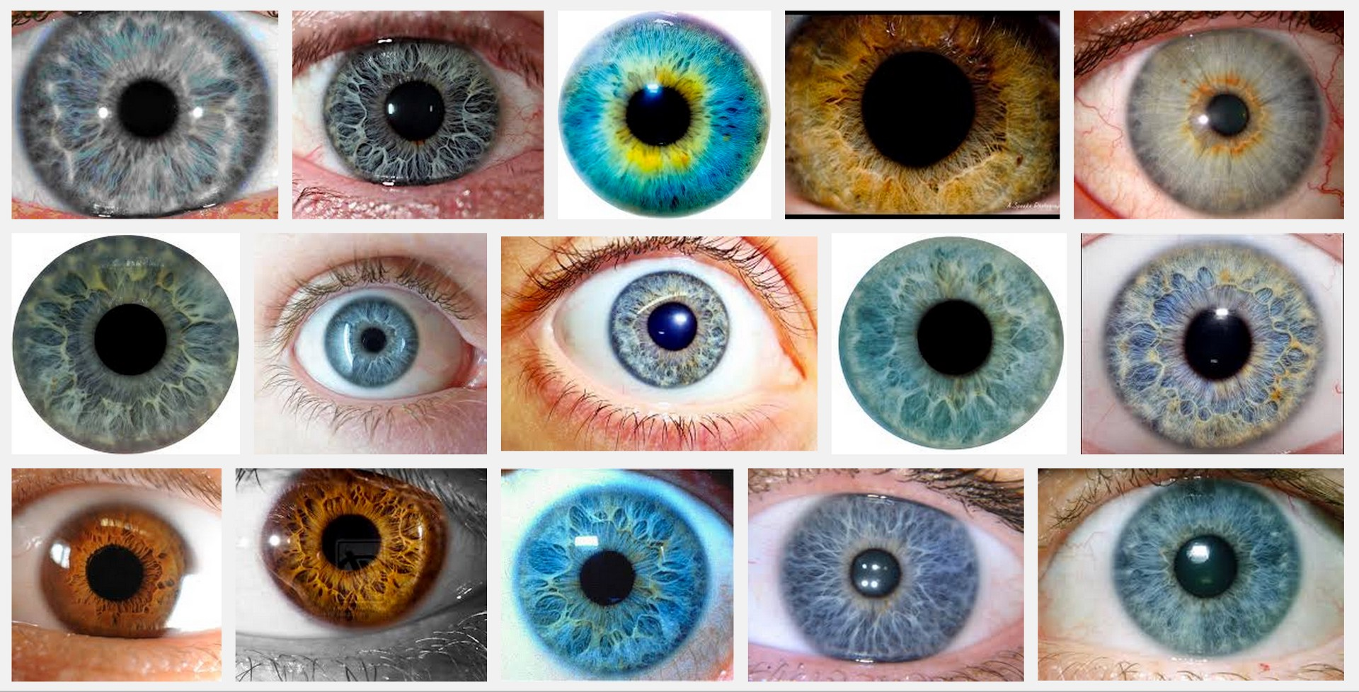 Structural Eye Color Is Amazing Paul Van Slembrouck Medium