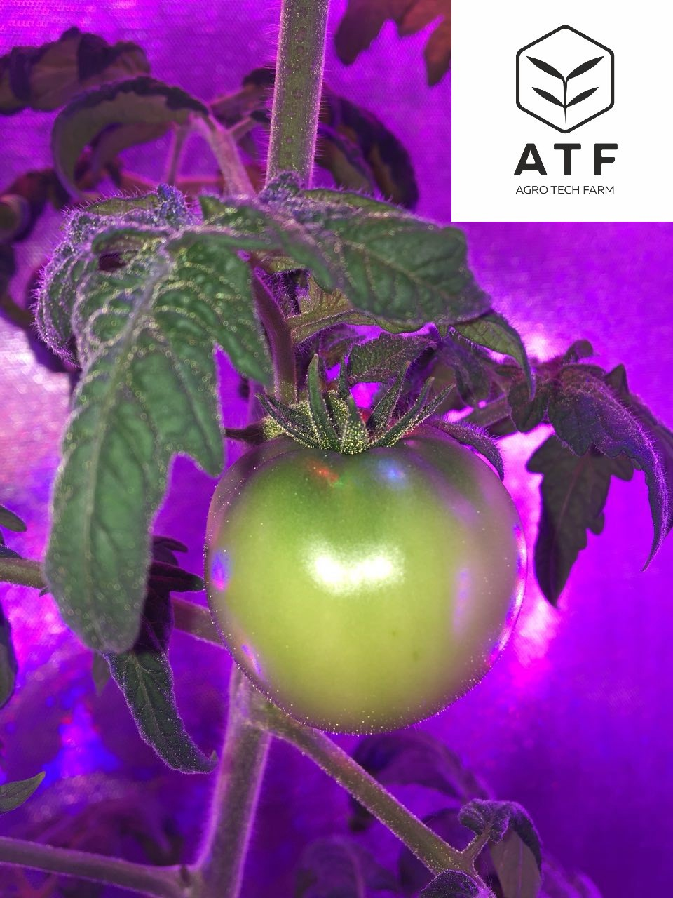 medium.com - Agro Tech Farm - Market of organic products The deficit of environmentally friendly and safe products is a global…