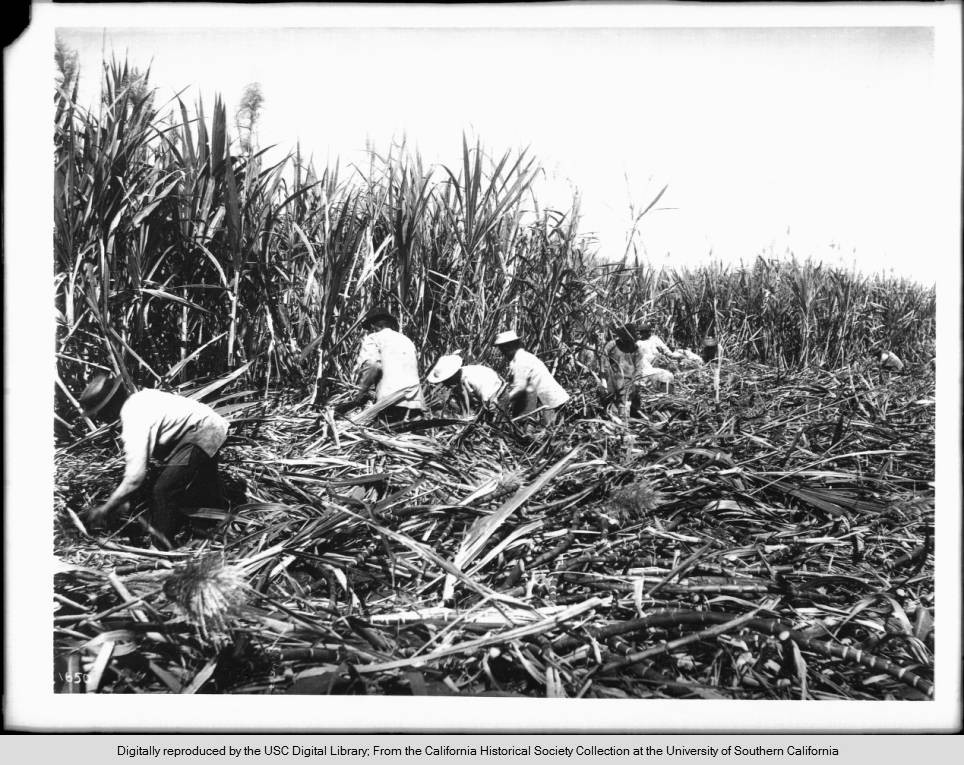The not-so-sweet story of how Filipino workers tried to take on Big Sugar in Hawaii