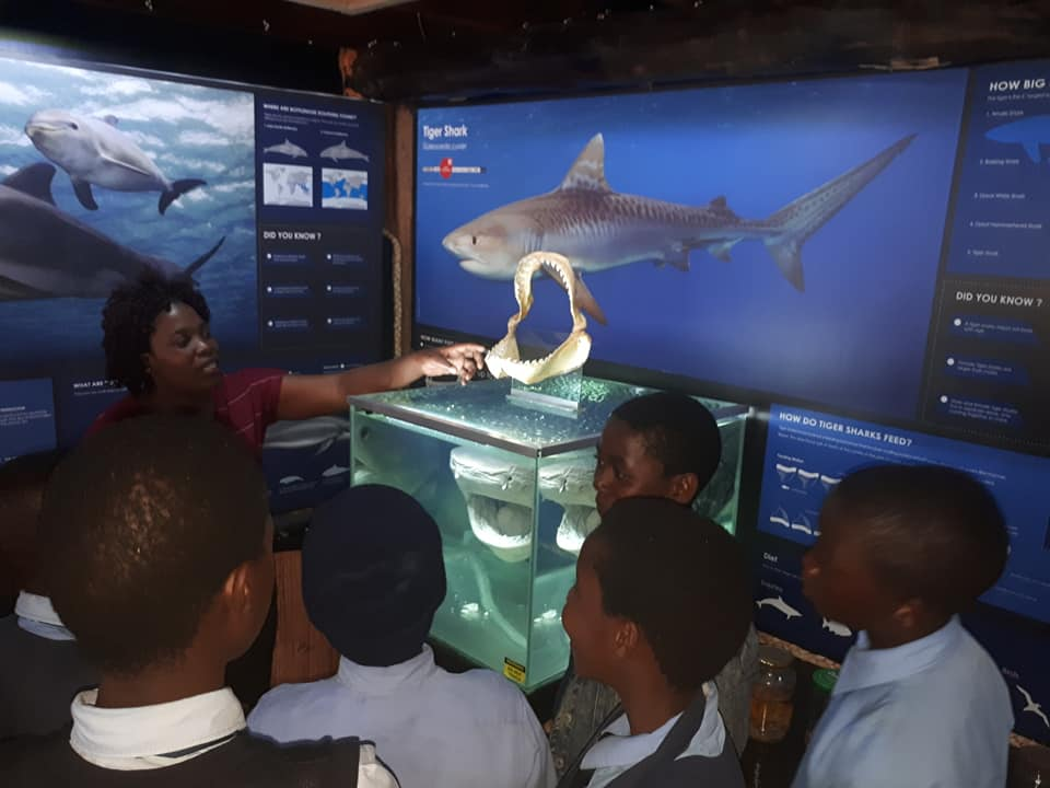 Students learning about how sharks teeth replace themselves in a conveyer belt-like fashion.