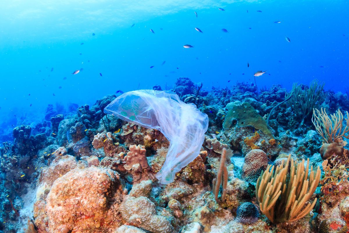 Combating Plastic Pollution using Technology