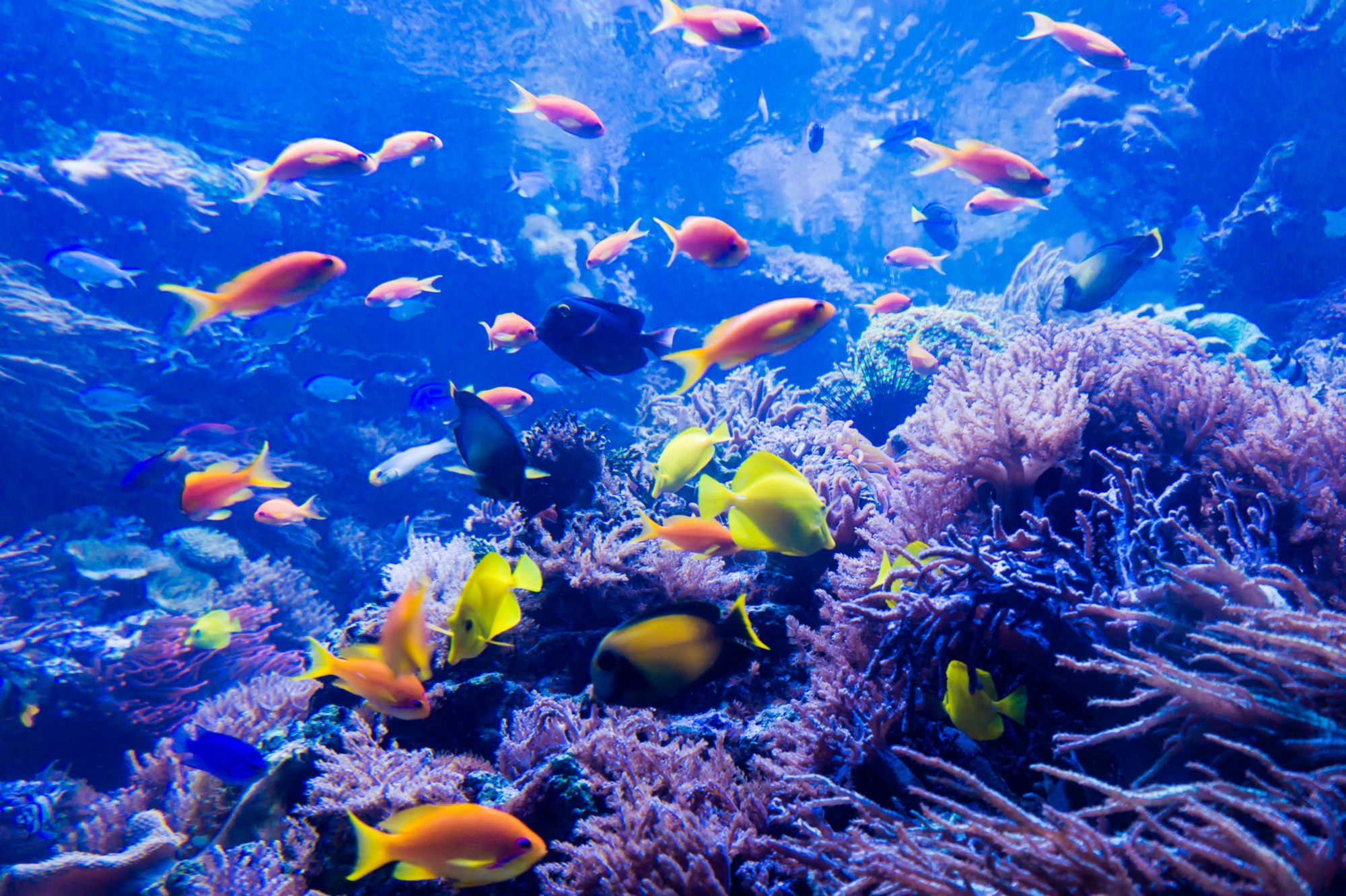 Image result for under the sea