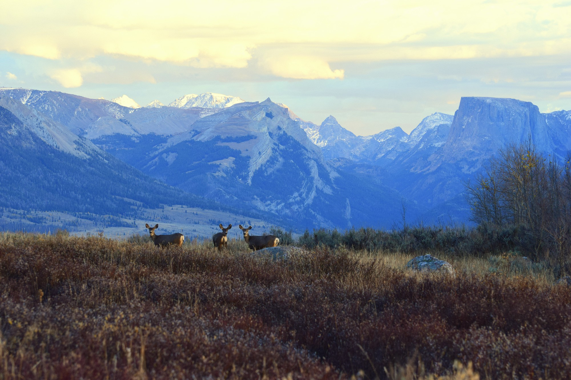 bridger teton Interagency bison hunt information bridger-teton national forest hunting access — bison hunting in the jackson hole area is limited to a portion of the.
