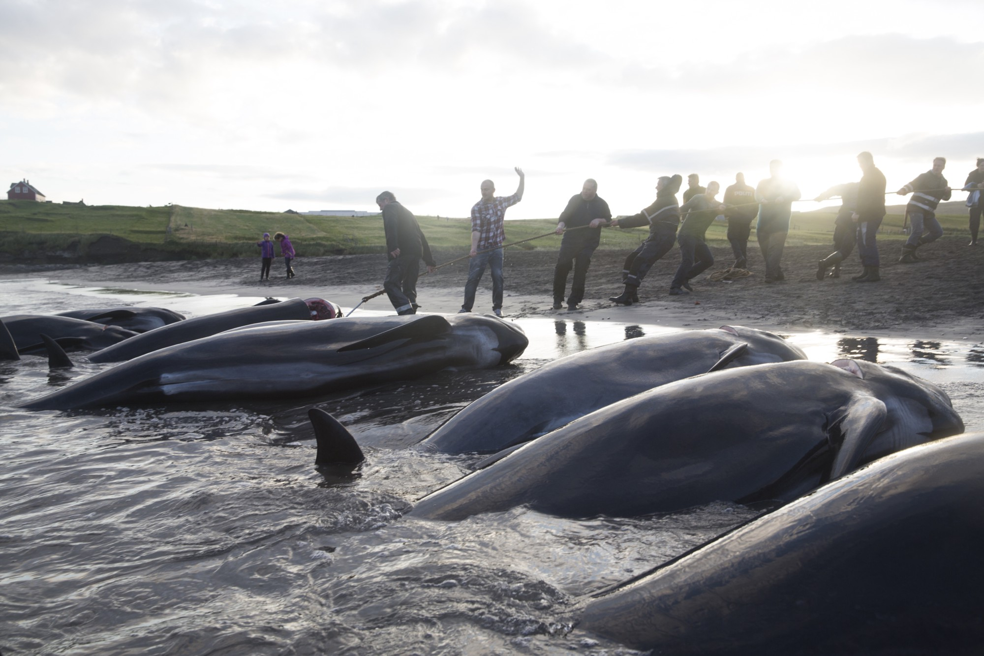 a whale hunt On sunday, more than half of the members of the international whaling  commission declared that group's two-decade-old ban on hunting.