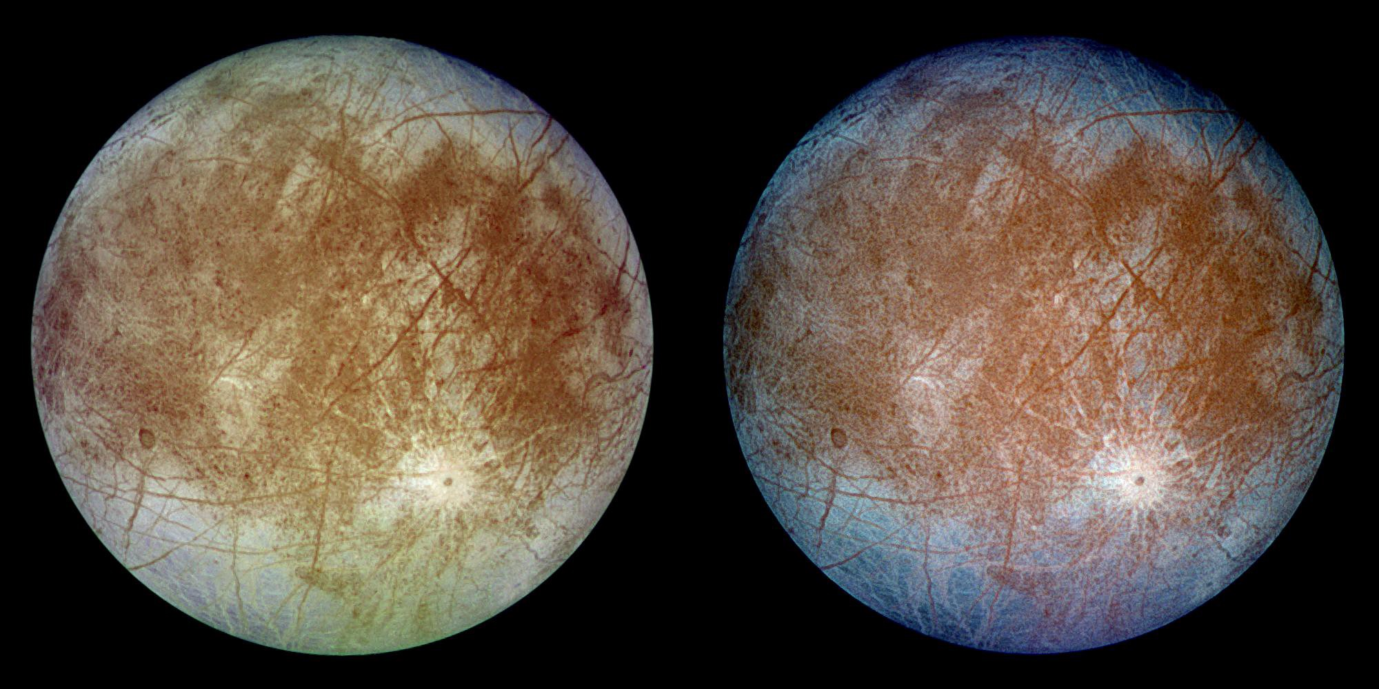 Is the Orange Material on Europa's Surface a Life Form?