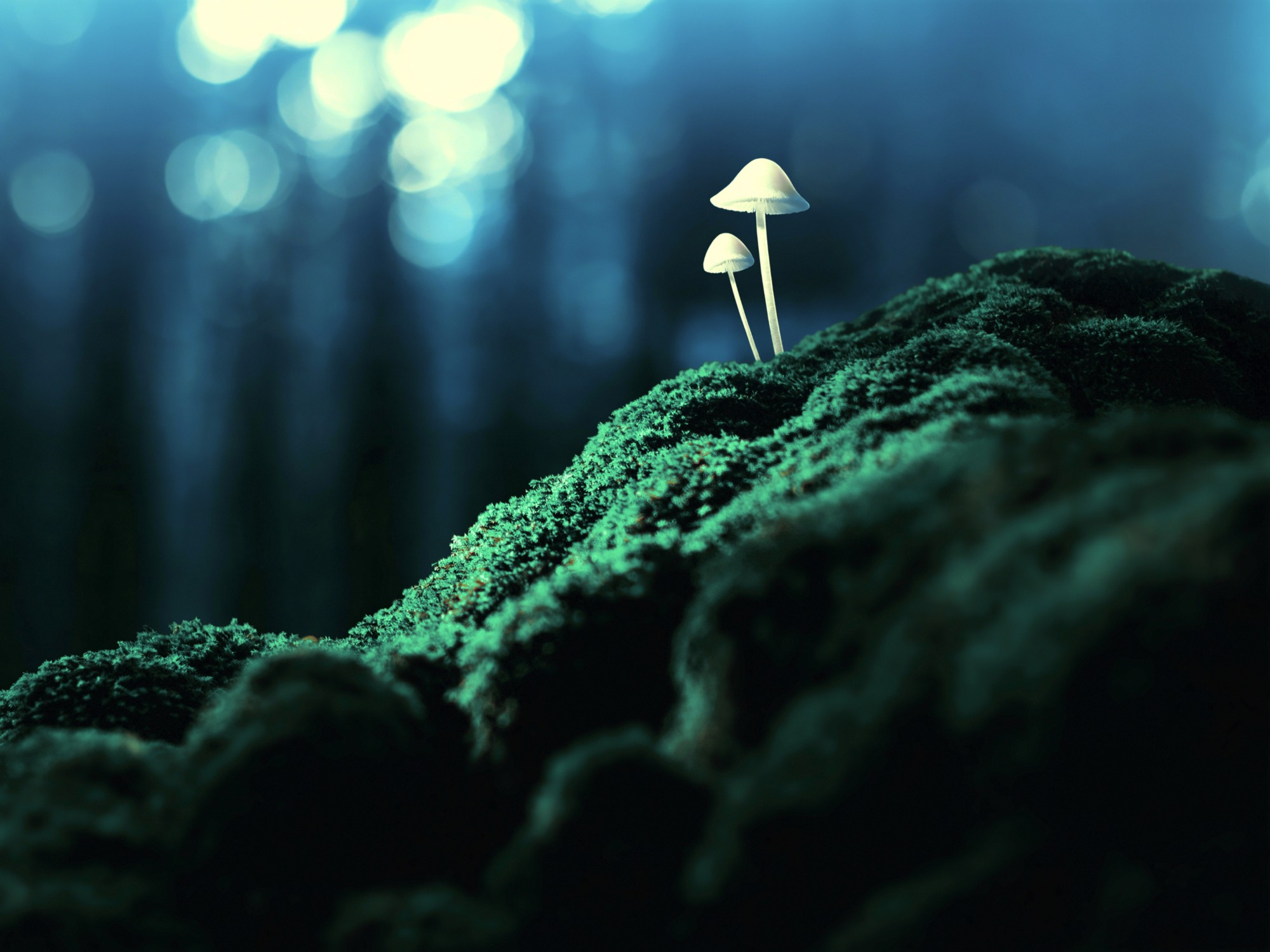 Meditating on Psychedelics : What Camp Are You In?