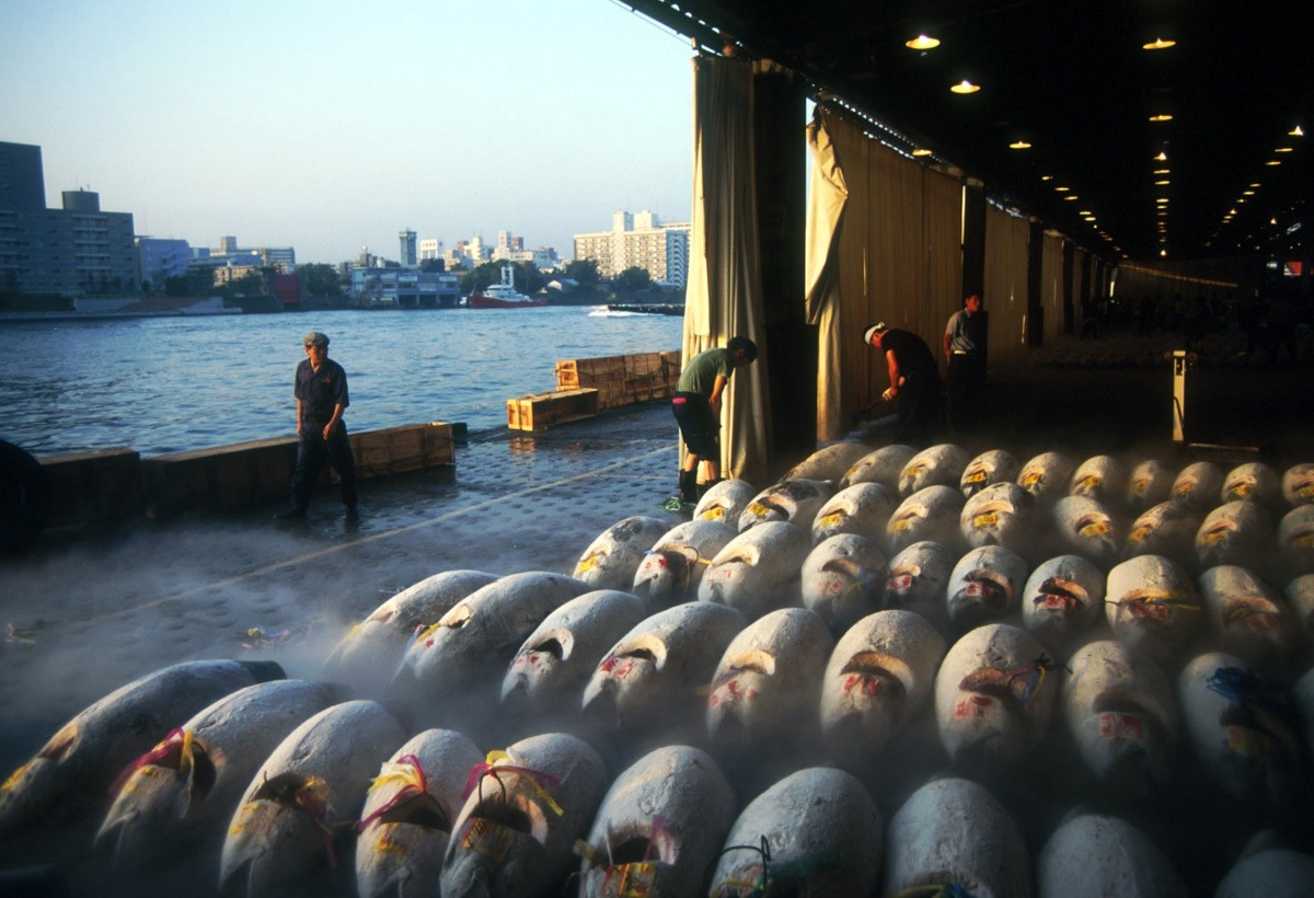 Witnessing the last days of blue fin tuna at the tokyo for Japan fish market
