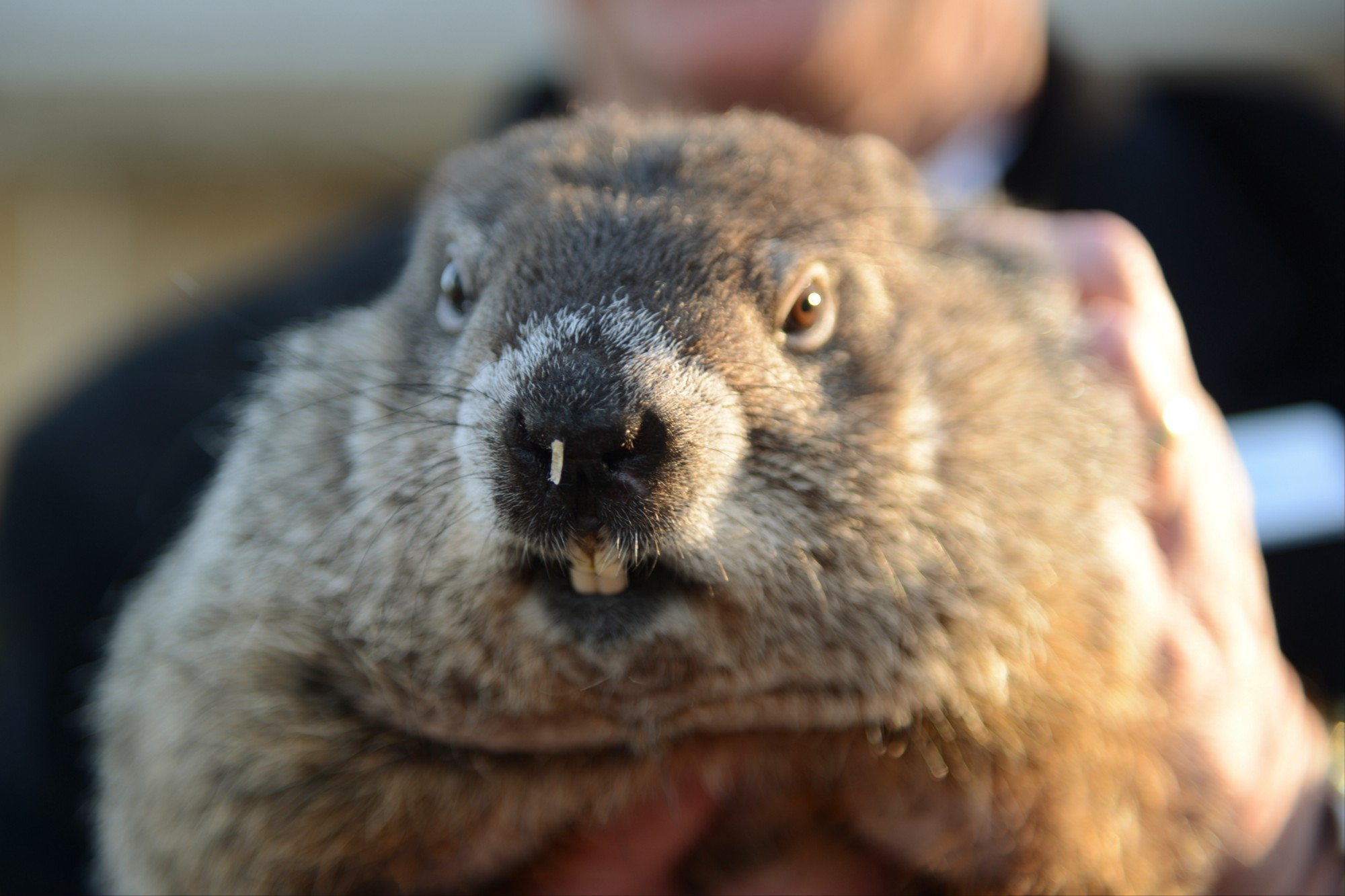 how accurate are groundhog day predictions jeremy neiman medium