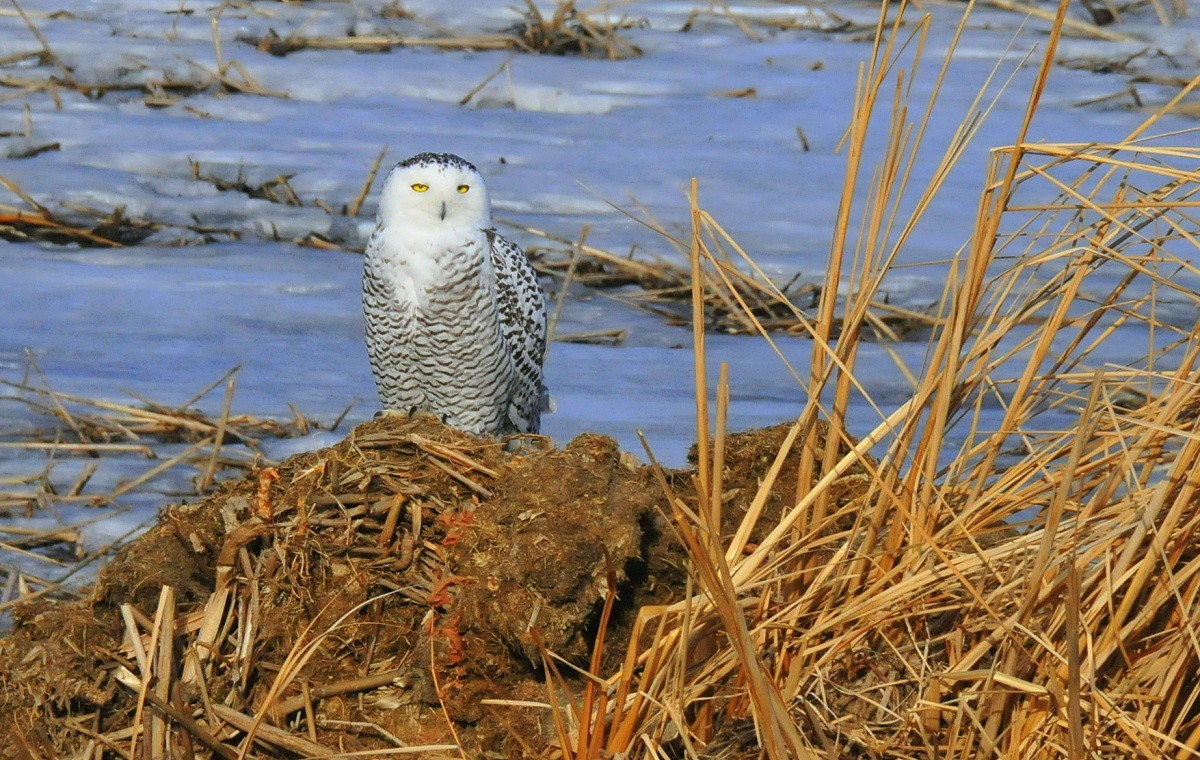 10 reasons you should care about what happens to the for Do owls eat fish