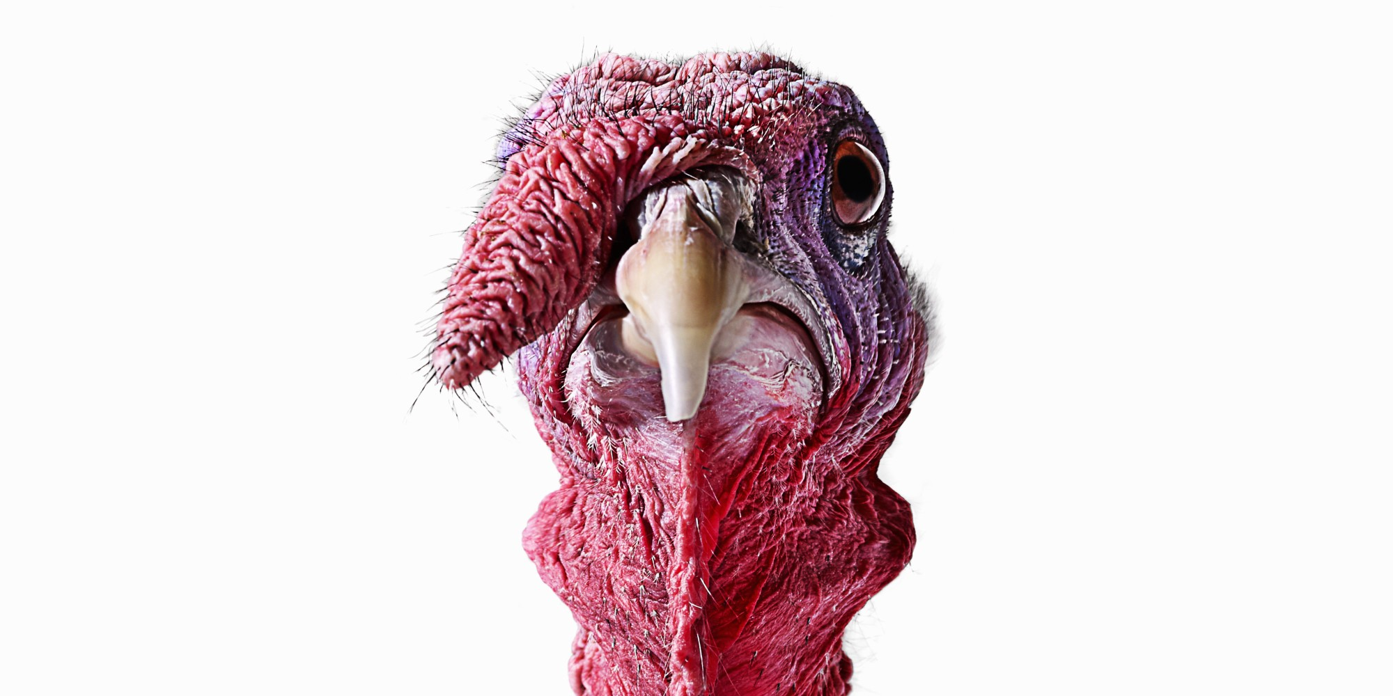Ten Years Ago A Wild Turkey Tried To Kill Me No I Am Not Talking About The Kentucky Bourbon Or Catchy Country Ditty By Lacy J Dalton Of Same Name