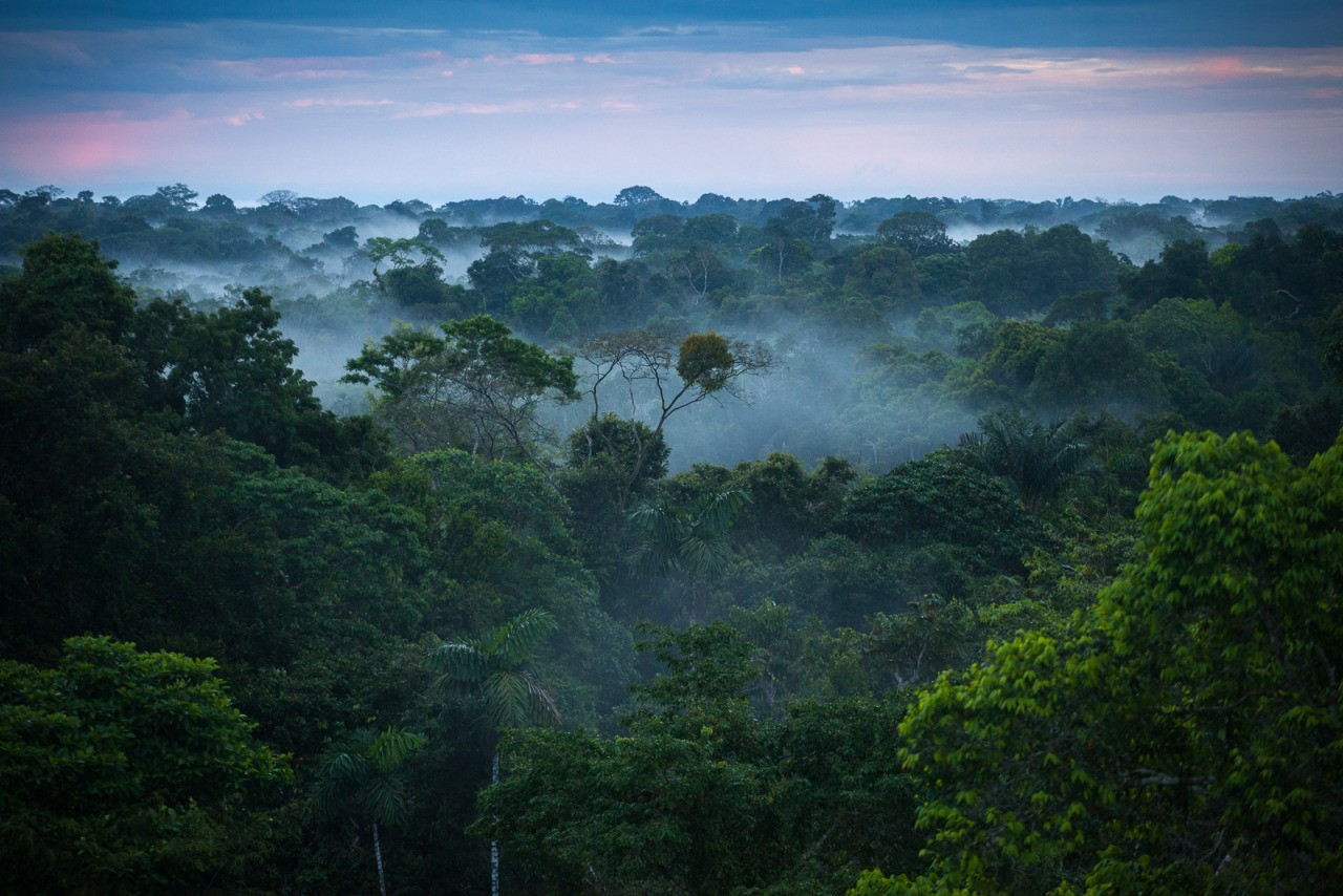 saving the rainforest with the power of our money