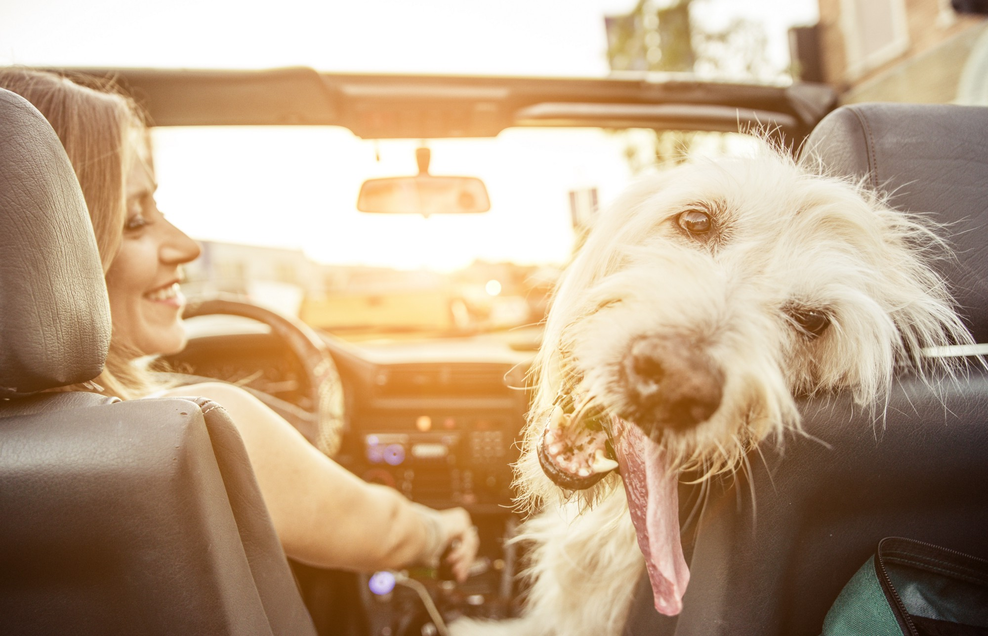 how to help your dog cope with car sickness and travel stress