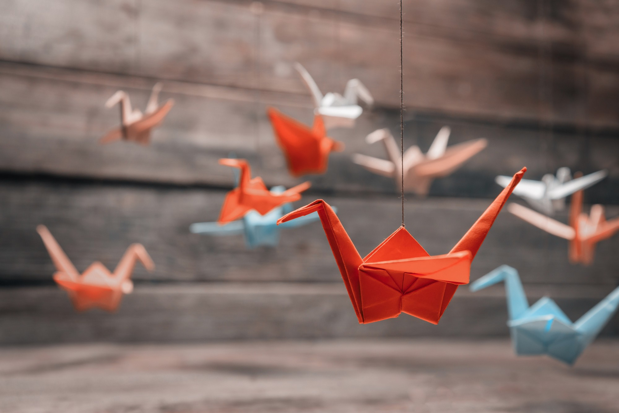 A thousand paper cranes the insanity of war dr arif akhtar a thousand paper cranes the insanity of war jeuxipadfo Choice Image