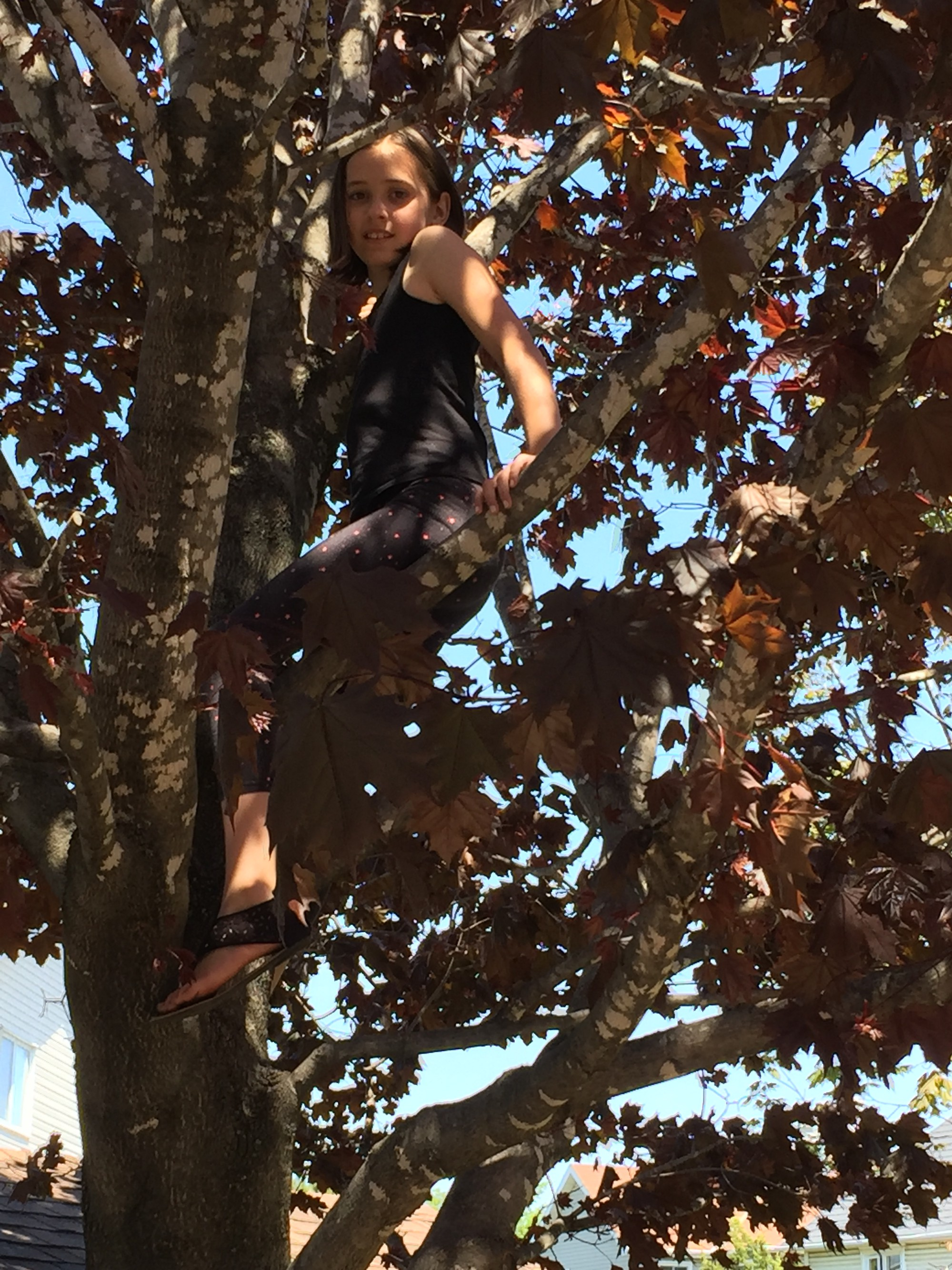 Its Amazing What Creatures One Finds Climbing High In The Trees This Time Of Year