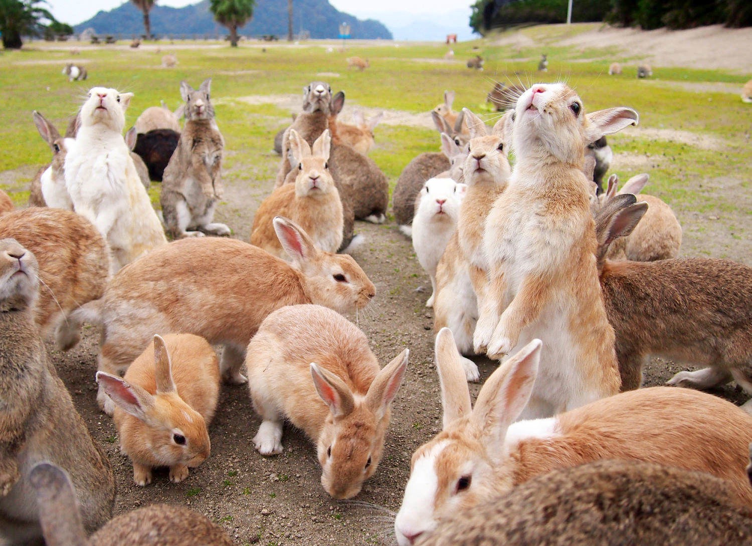 Can You Imagine The Island Which Are Occupied By Wild Animals In A Real Life It Does Exist In The Far East Country Japan Once You Enter The Island