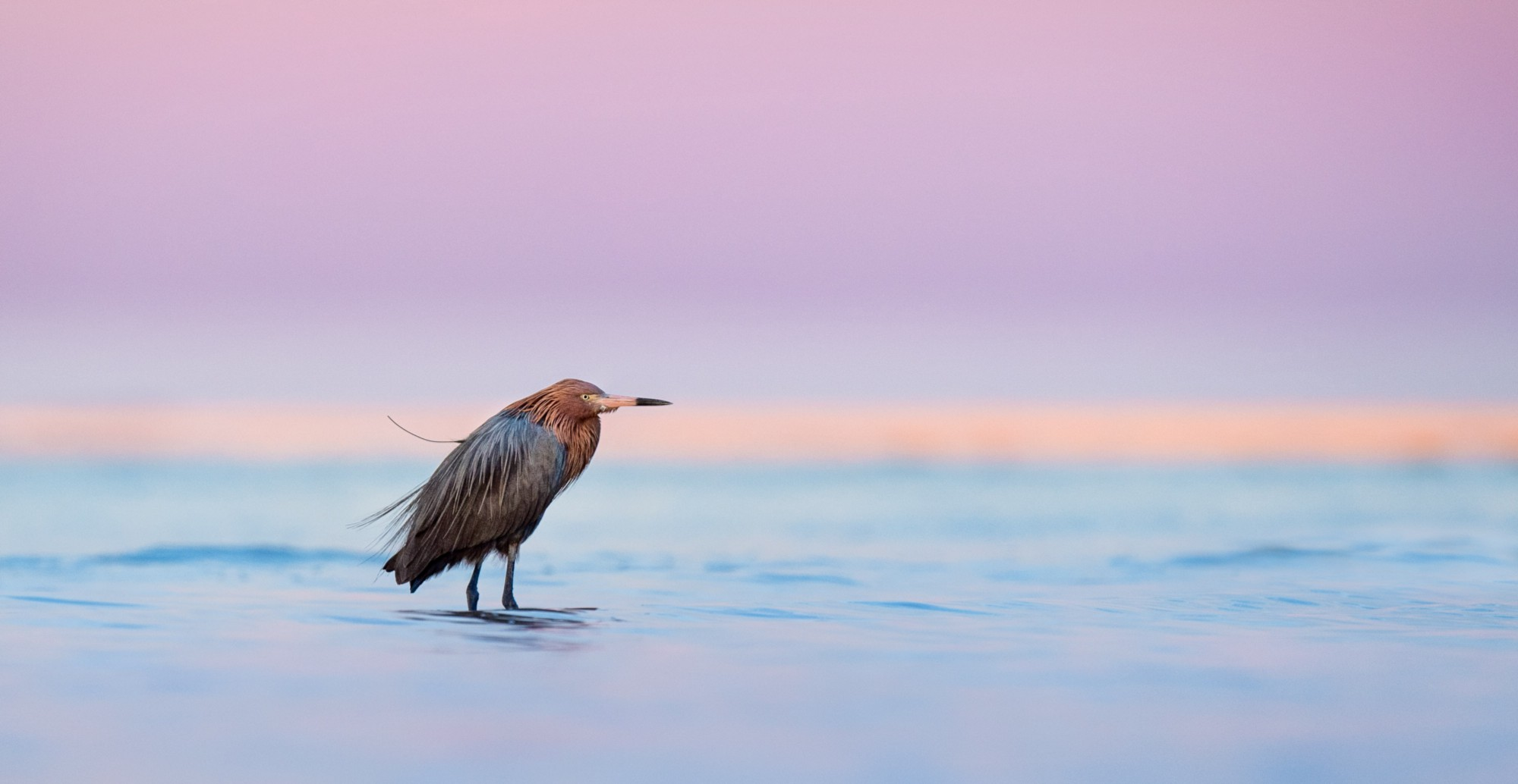 My Good Friend And Bird Photographer Scott Keys Had Told Me I Must Visit Bunche Beach While Was In Florida So Ended Up Making It First Main Outing