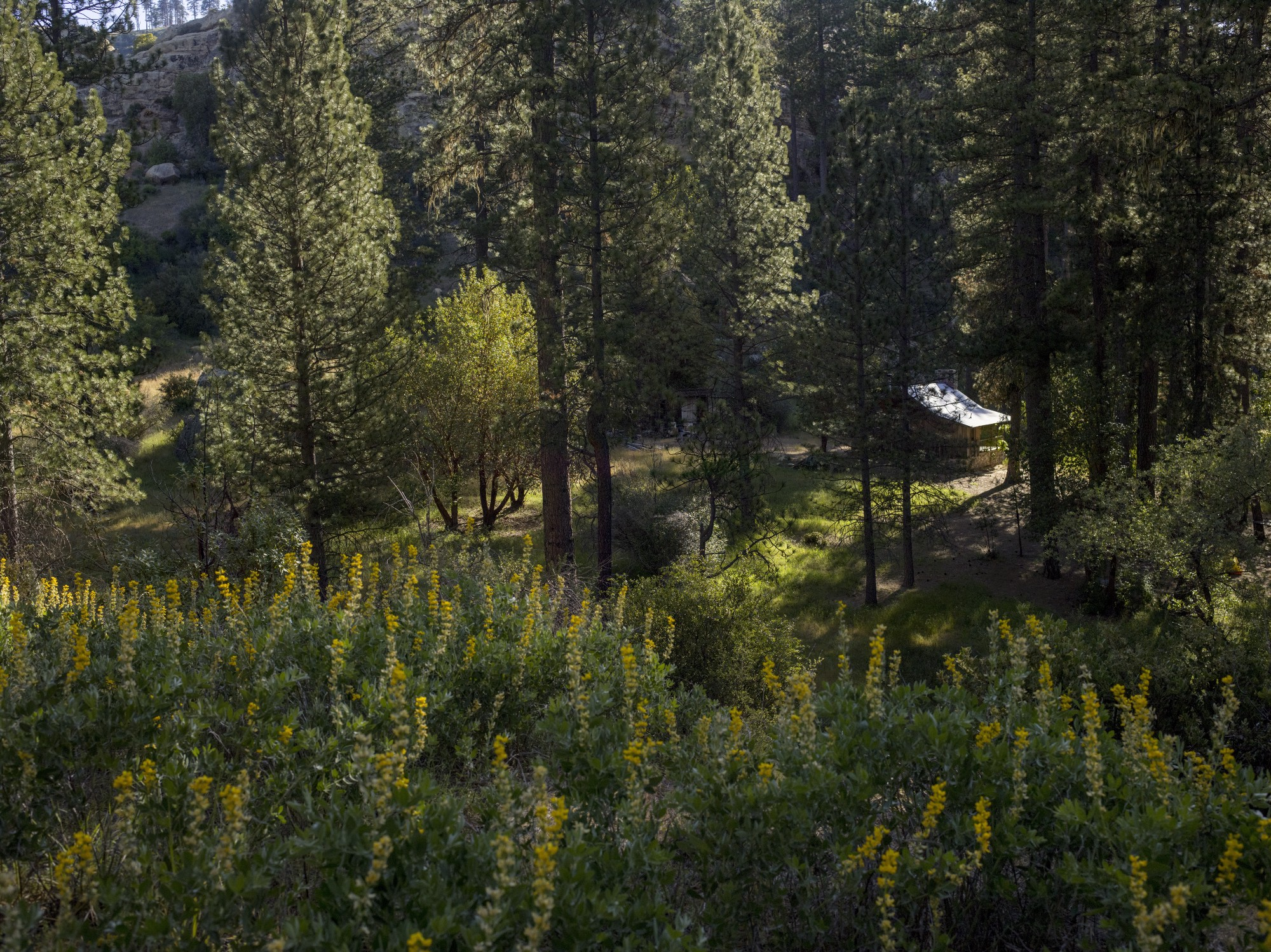 Who built a life in an american wilderness cabin porn medium