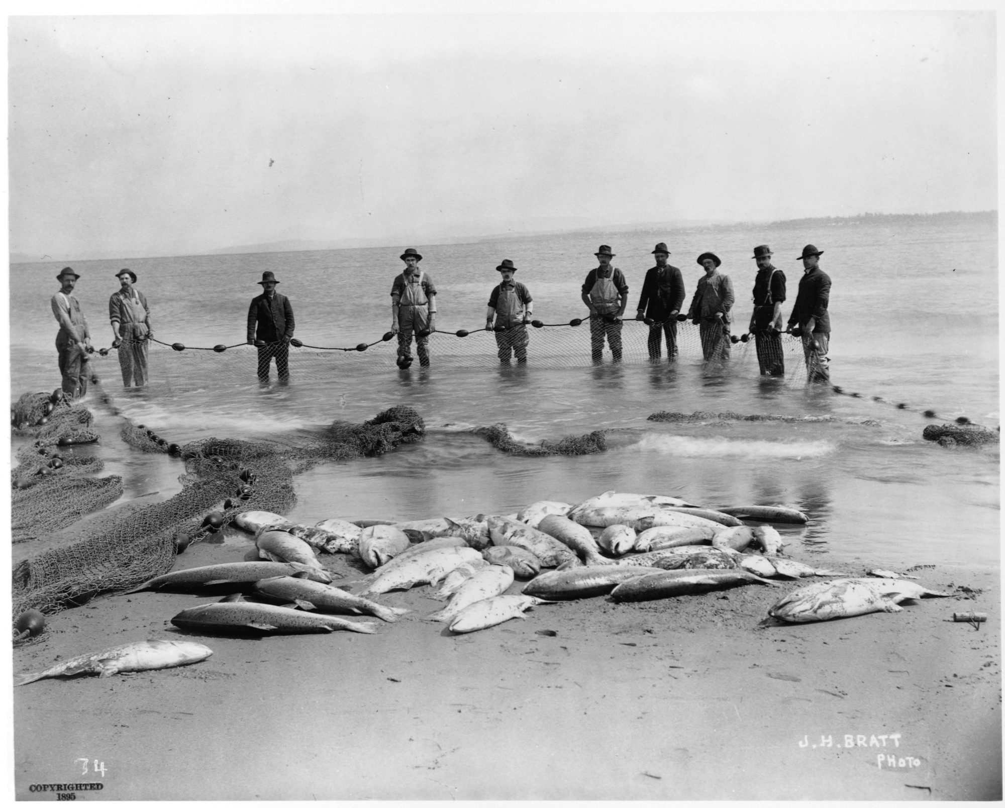 There used to be salmon as big as golden retrievers in the for Salmon fishing columbia river