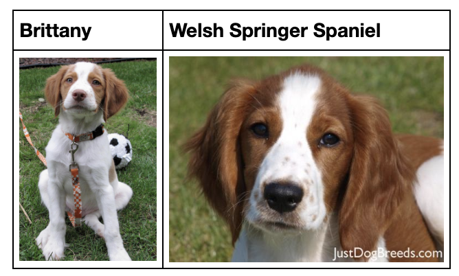 It's challenging even for humans to identify a dog breed