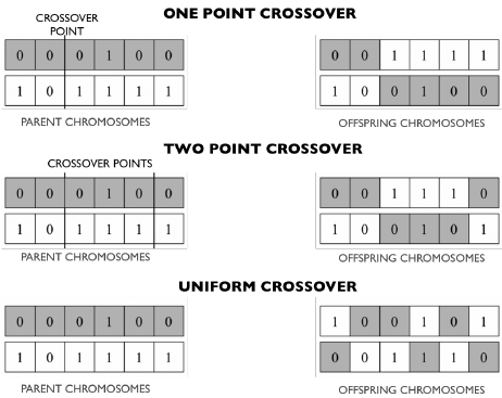 Figure 2: Different types of crossover [2]