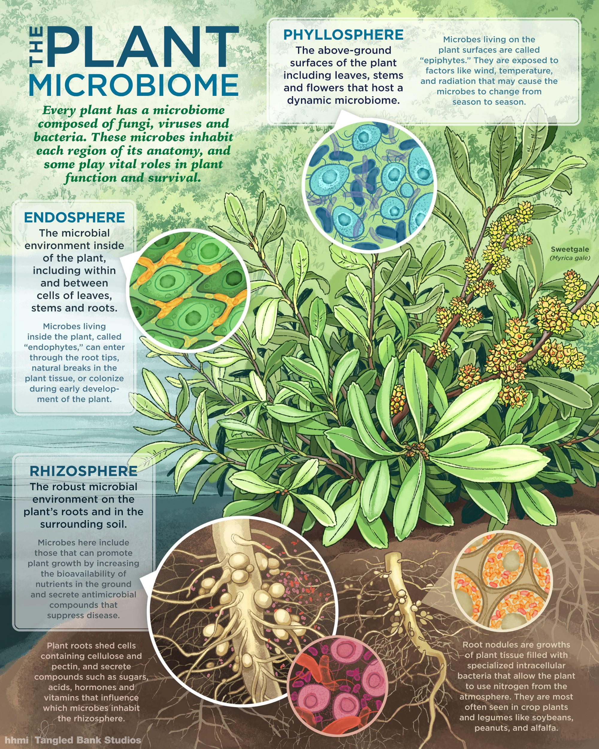 Visualizing The Plant Microbiome – I Contain Multitudes – Medium