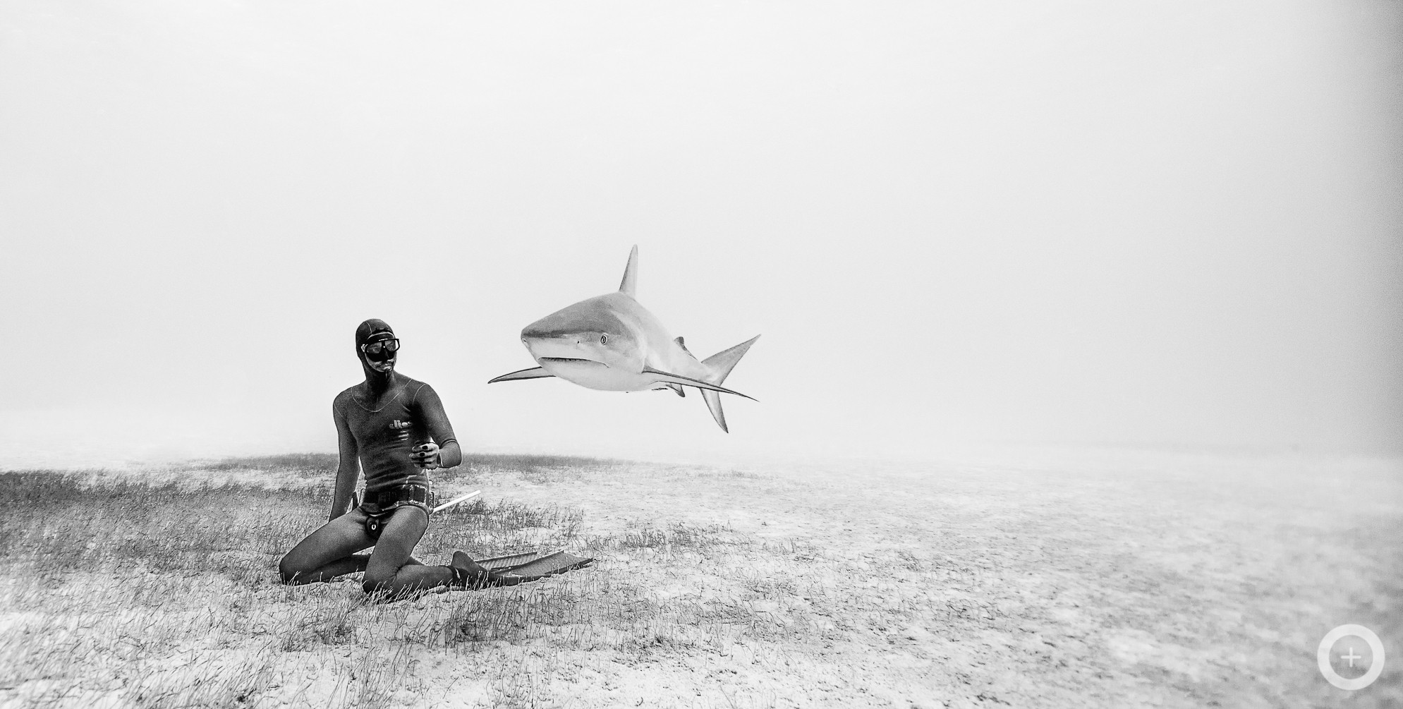 Meet The Freediving Couple Who Make Stunning Underwater Photos - Amazing black white underwater photography