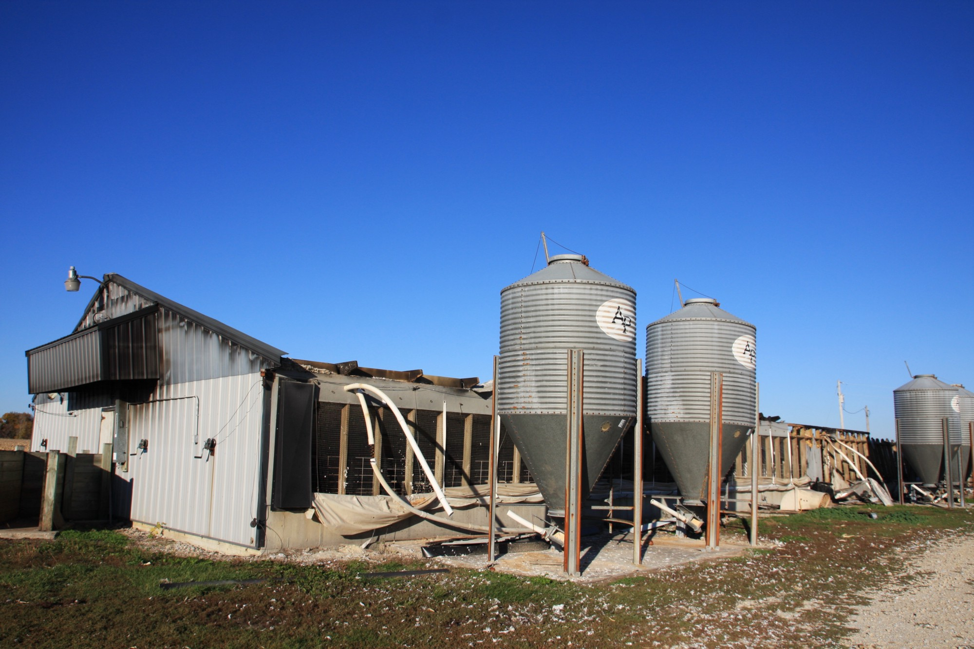 Farm Safety Firsthand Real Pig Farming