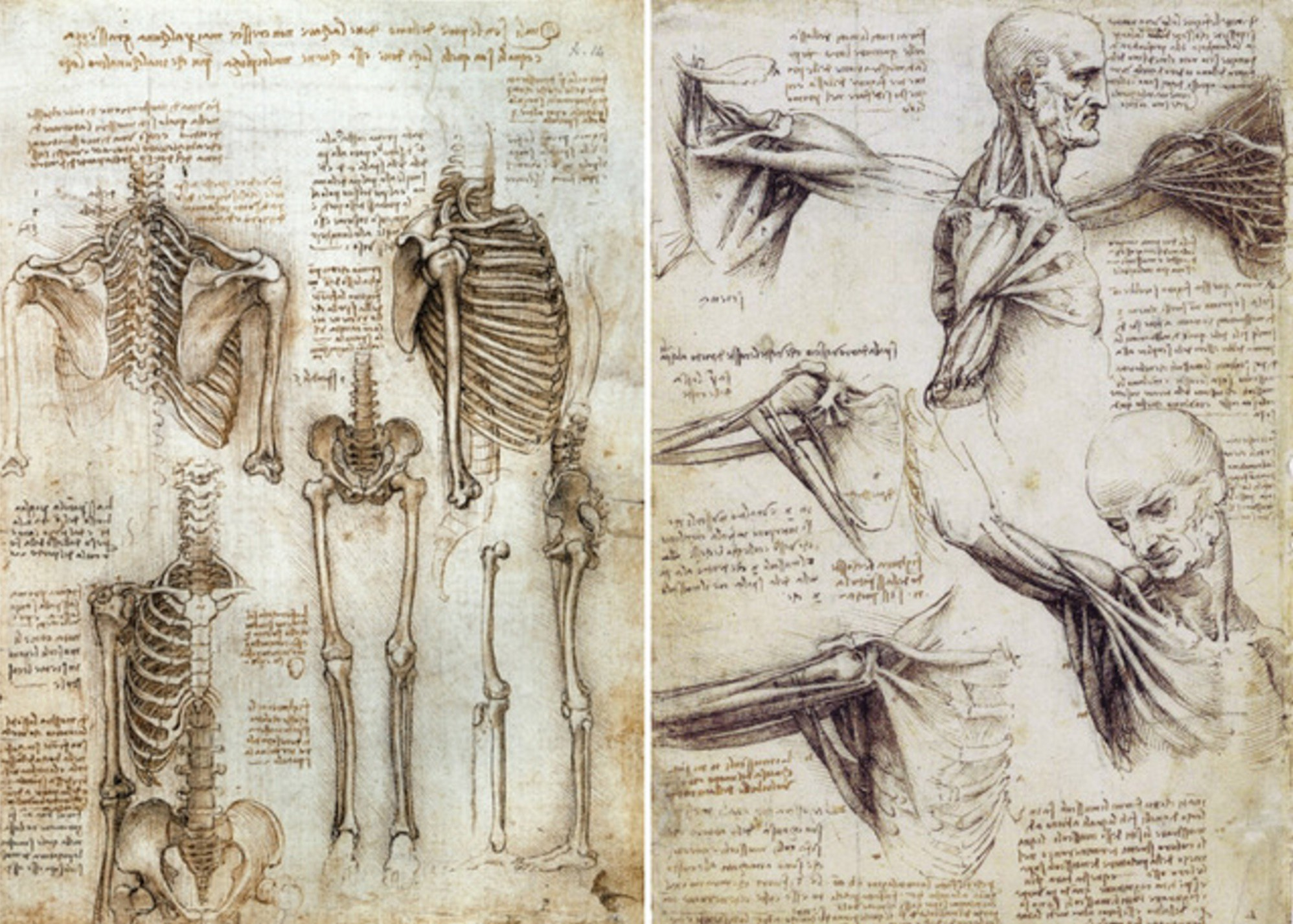 On The Knowledge of The Human Body, or Ode to Anatomy